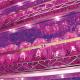 Artículo en Redagrícola: Hágase la luz óptima para el desarrollo de las plantas